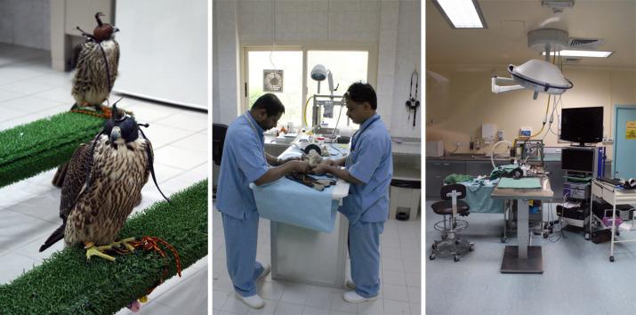 Im Abu Dhabi Falcon Hospital