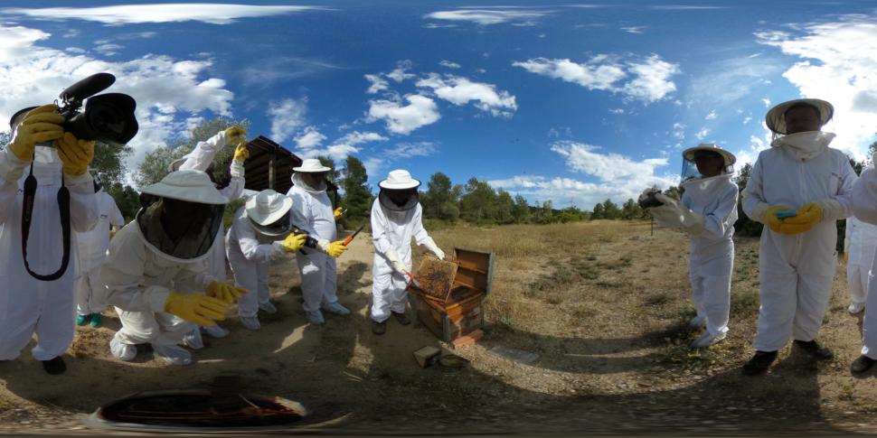 Wabenkontrolle im Bienenstock